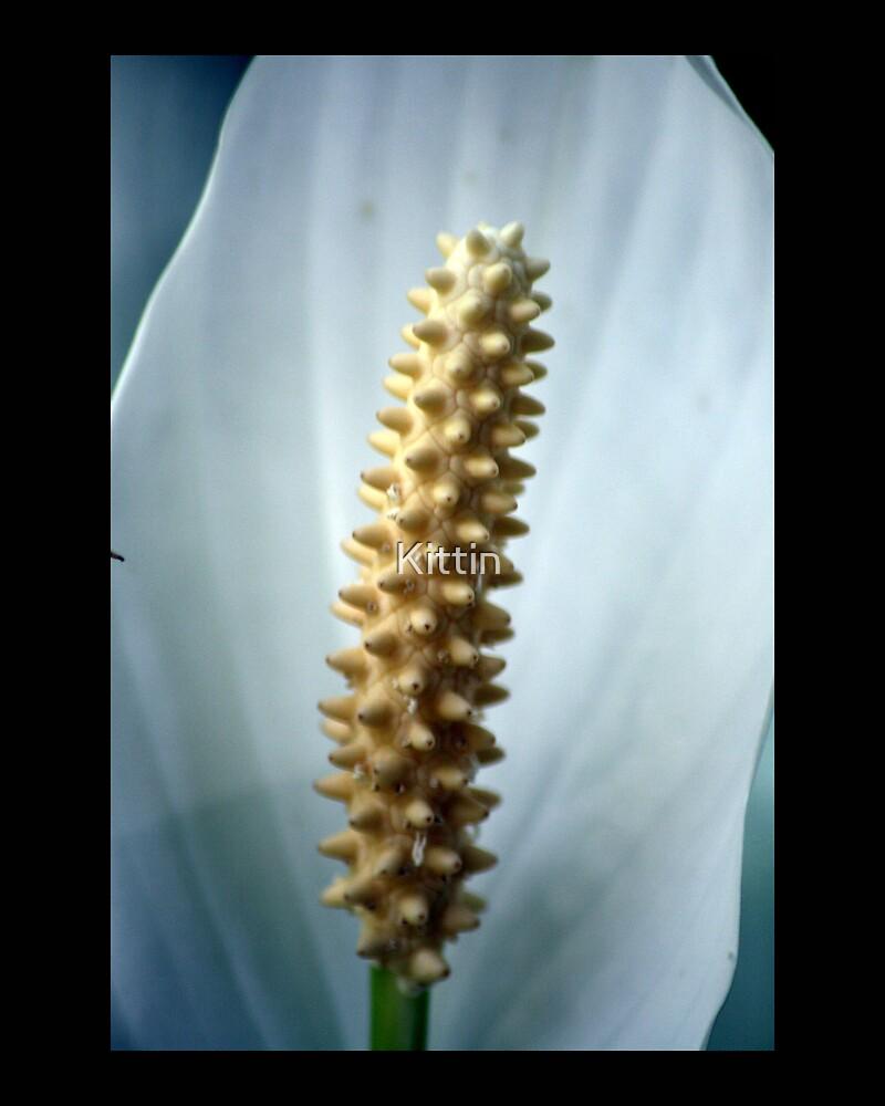 flower 04 by Kittin