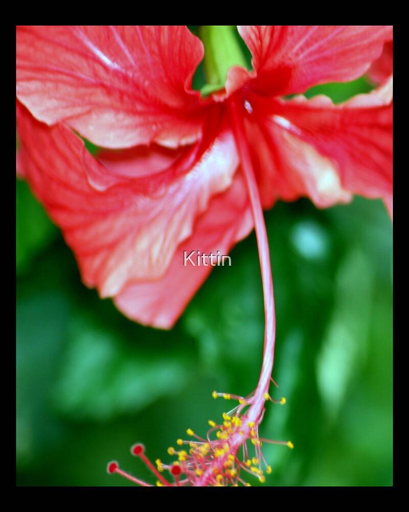 flower 11 by Kittin