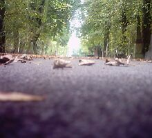 squirrel view by mossa
