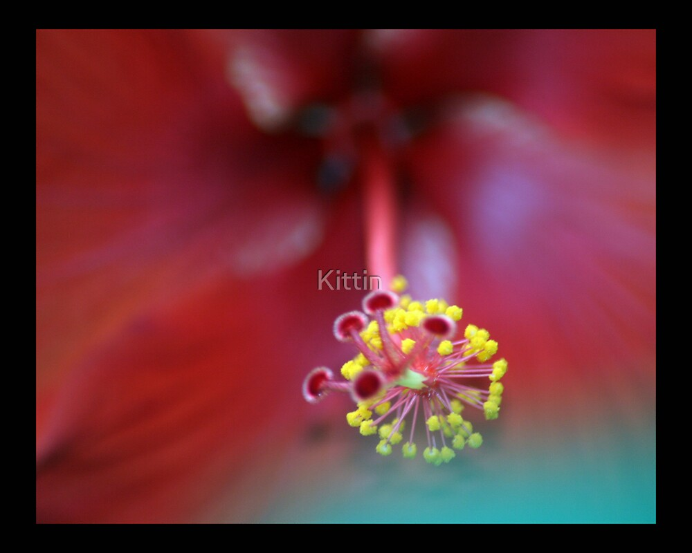 flower 12 by Kittin
