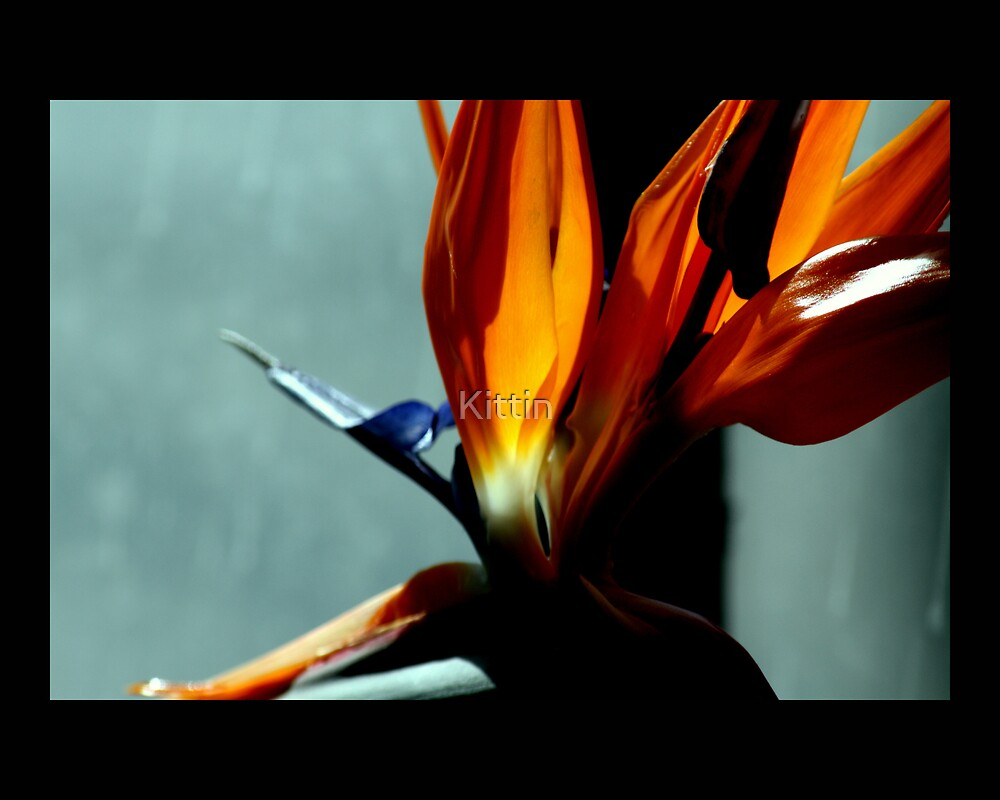 bird of paradise 07 by Kittin