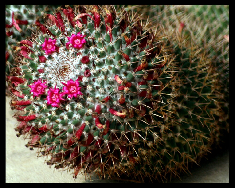 cactus 02 by Kittin