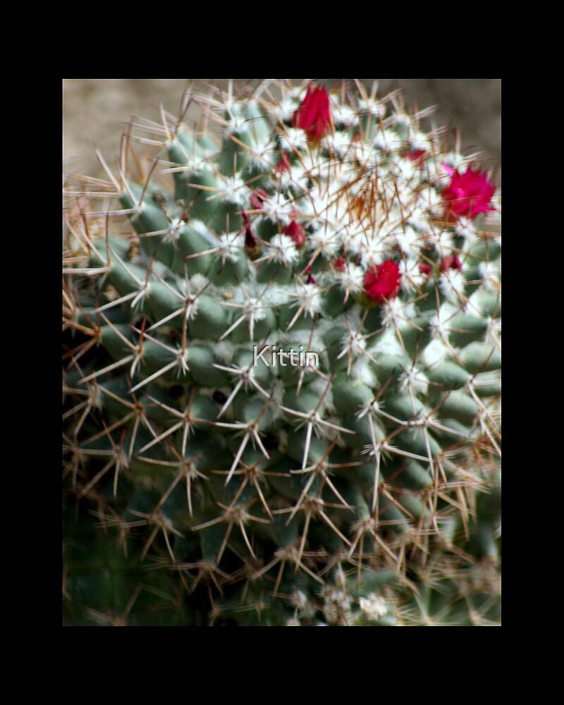 cactus 05 by Kittin
