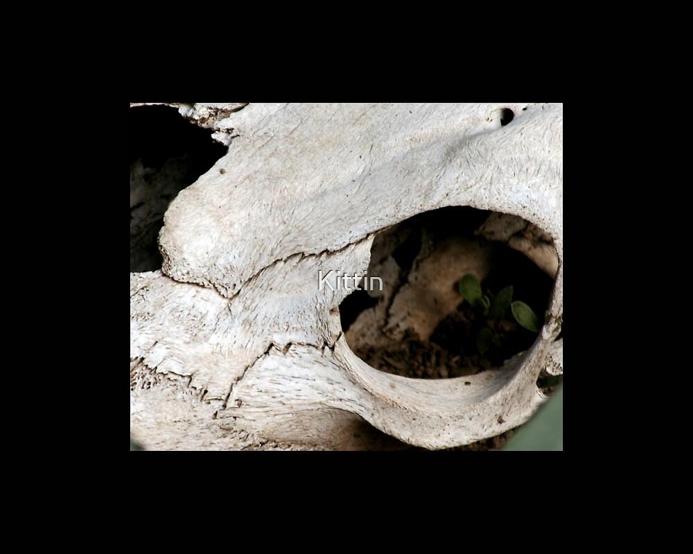 skull 02 by Kittin