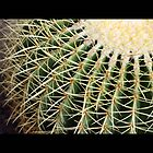 cactus 09 by Kittin