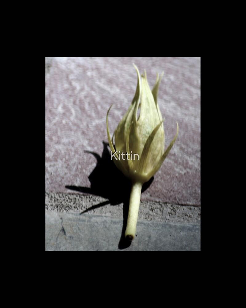 flower 17 by Kittin