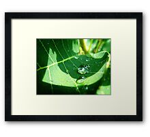 Water Drop Framed Print