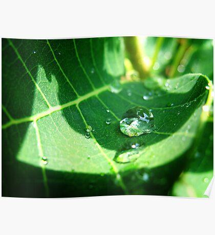 Water Drop Poster