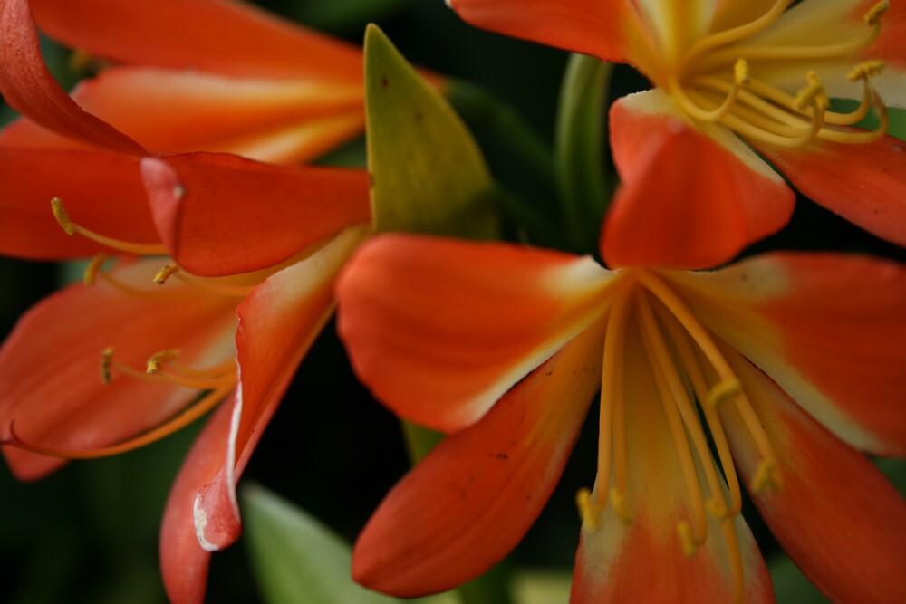 It's orange by Bardiebar