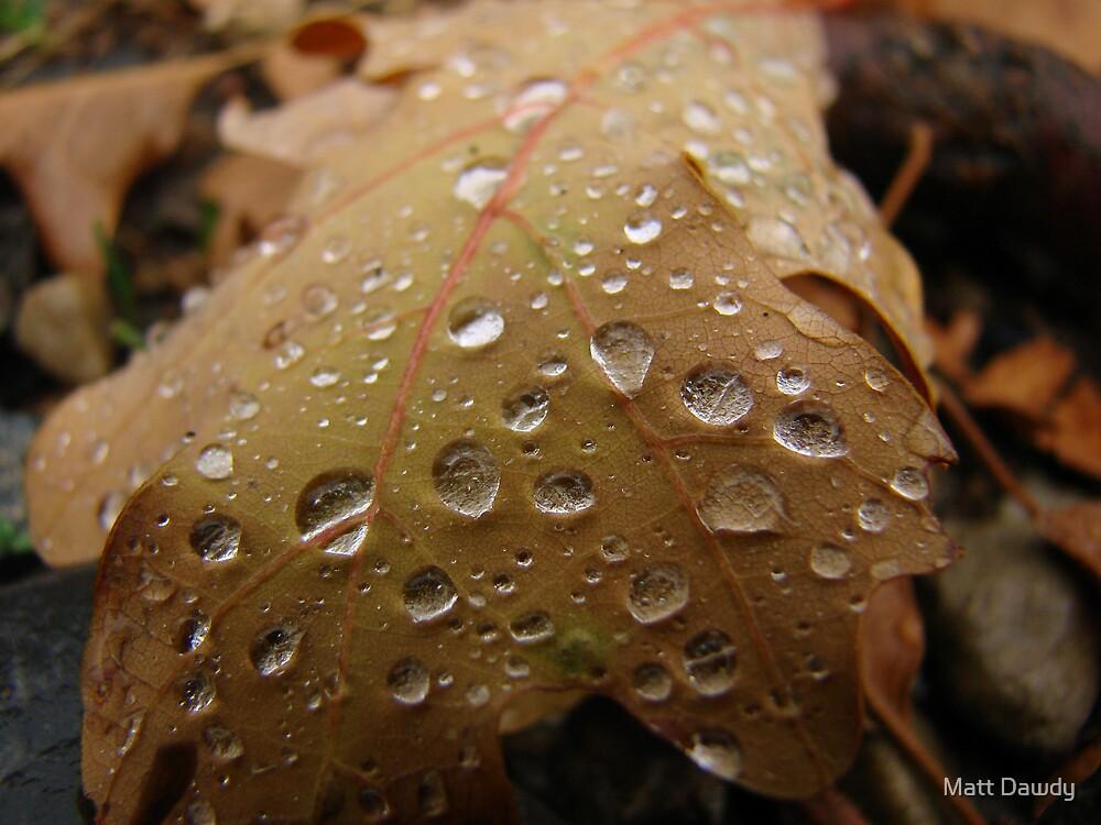 Leaf Drops by Matt Dawdy