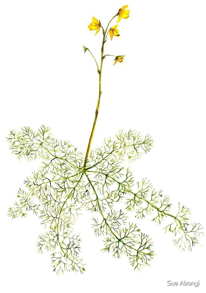 Common Bladderwort  - Utricularia vulgaris by Sue Abonyi
