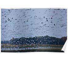 Saskatchewan - Snow Geese Migration Poster