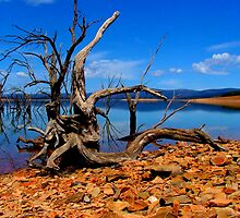 Gnarly !! by Bryan Cossart