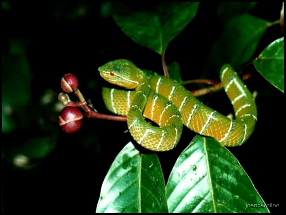 reptile by joancaroline