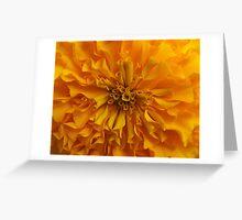 Marigold Macro Greeting Card