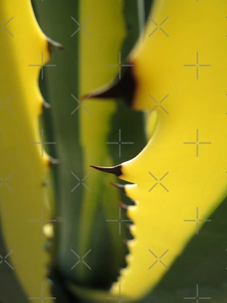 Succulent Thorns by Ye Liew