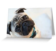 Pug Dog Portrait Greeting Card