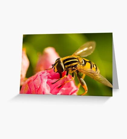 Just Bee-cos Greeting Card