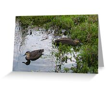 Ducks. Regular visitors. Greeting Card