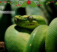 xmas snake  by Fledermaus