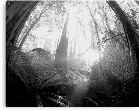 Enchanted Web by JAZ art