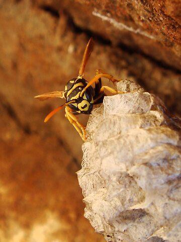 Hornets Nest by Arlita Marie Moles