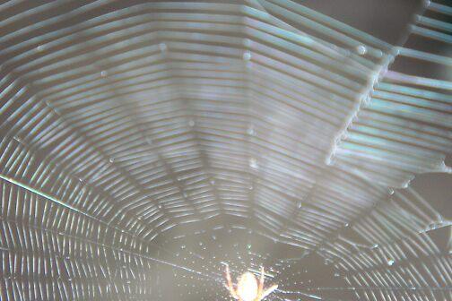 Spider web  by Arlita Marie Moles