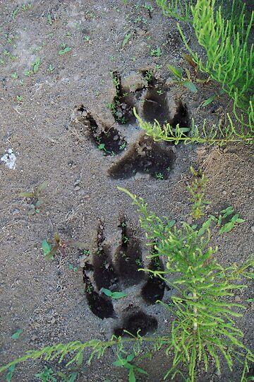 Footprints by Arlita Marie Moles