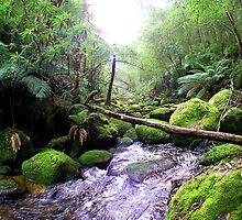 Toronga River Bend... by JAZ art