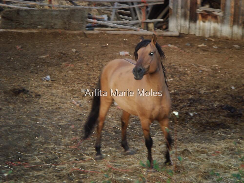 Horse Kiger 1  by Arlita Marie Moles
