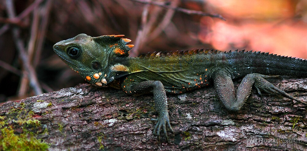 lazing log lizard by Will Russell-Smith