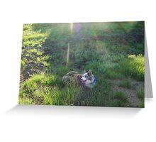 Australian Shepard Dog 1 Greeting Card