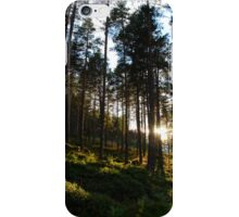 Sunlit Forest // Norway iPhone Case/Skin