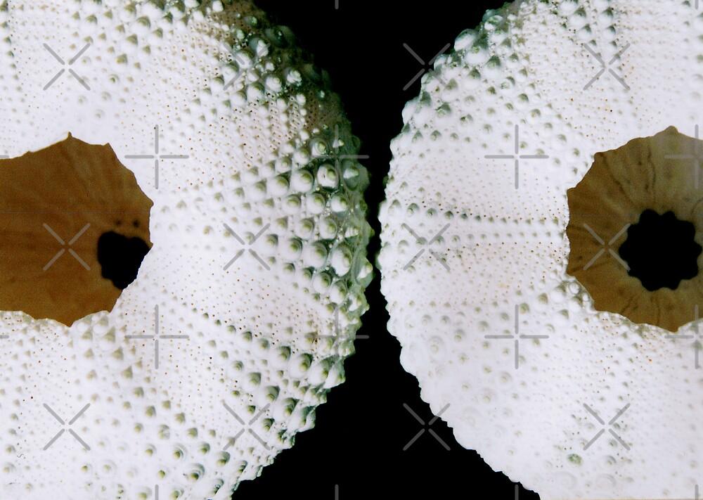 Sea Urchins by Marita