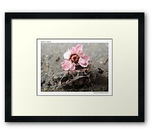 Insect Wake Framed Print