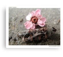 Insect Wake Canvas Print
