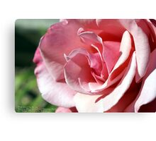 Pink - Kissed by the afternoon sun; Patricia Merz Garden, Gr. Hills, CA USA Canvas Print