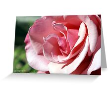 Pink - Kissed by the afternoon sun; Patricia Merz Garden, Gr. Hills, CA USA Greeting Card