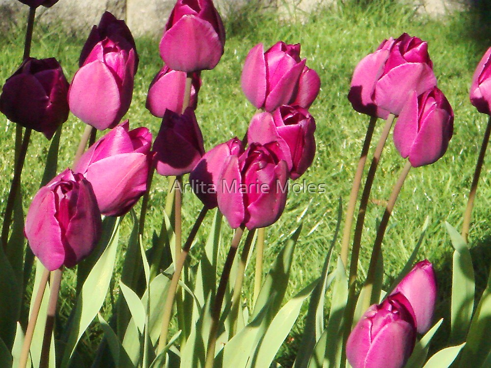 Floral  by Arlita Marie Moles