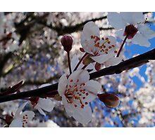 Floral  Photographic Print