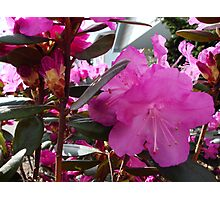 Rhody Photographic Print