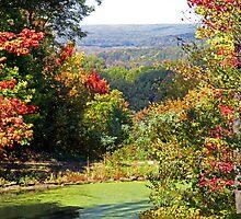 Autumn Begins by Jeff  Burns