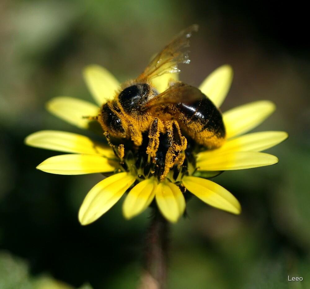 Pollen Coat by Leeo