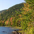 autumn colorsb by etccdb
