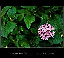 Egyptian Star Cluster - Cool Stuff by Maria A. Barnowl