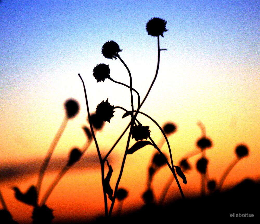 sunset for the flowers- by elleboitse