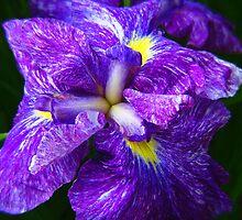 Beautiful Flowers by Dmarie Frankulin