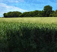 Green wheat field landscape by ronyzmbow