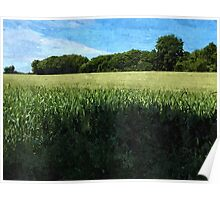 Green wheat field landscape Poster