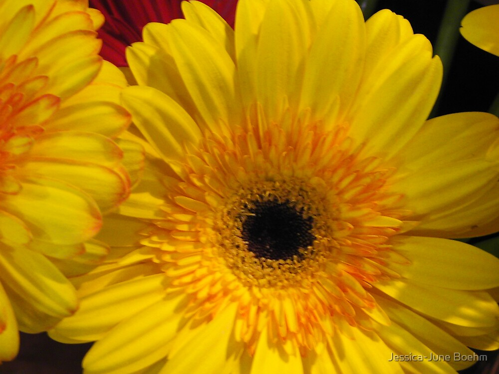 Yellow Daisy by Jessica-June Boehm